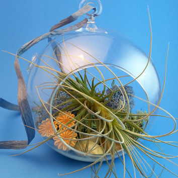 Hanging Terrarium / Air Plant Hanging Glass Globe GIFT BOX / Air Plant Terrarium Kit / Hanging Garden Kit  / Hanging Planter / Indoor Plants