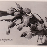 Russian Vintage Postcard (1957) / Real photo postcard RPPC / Happy Birthday Black and White Tulips postcard