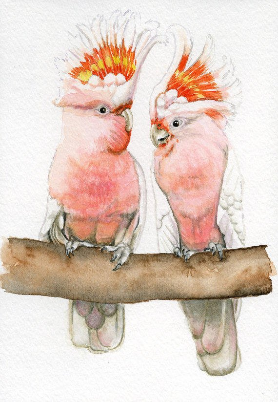 Pink Cockatoo Bird Painting 5x7 Print From Earthspalette