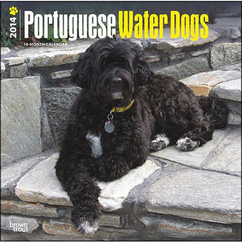 Portuguese Water Dogs 2014 Wall Calendar
