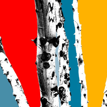 Retro Photography, Tree Pictures Color Pop Splash Colorized Photograph, Multi Colored Tree Trunk Bark Photo, Wall Poster Art Prints