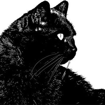 the familiar black cat face PNG clipart Digital Image Download printables graphics pets animal art