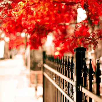 Scarlet Autumn Wall Decor- 12x12 photograph for Ikea Ribba- black- red- orange- Fall colors