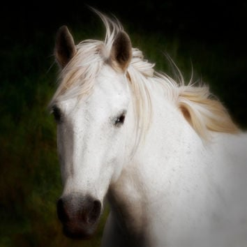 White Horse, Nature Photography, Carmargue White Horse, Horse Portrait, Animal Photo, Gift For Her, Fine Art Photography Print