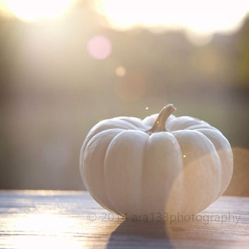 40% OFF SALE Pumpkin Decor, White Pumpkin Fall Photo Autumn Home Decor Harvest Neutral Beige - 5x5 Fine Art Photography Print - October
