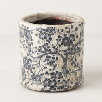 Daylily Herb Pot by Anthropologie Black & White
