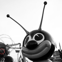 Peace Bee II - Southwest, Amusement, Fine Art Photography, Gallery Wrap or Print, Multiple Sizes
