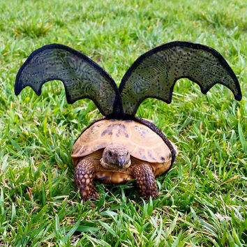 Pet Tortoise Costume, Bat Costume, Pet Costume, Tortoise Costume, Turtle Costume
