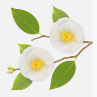 Appree Camellia leaf white sticky memo notes Large