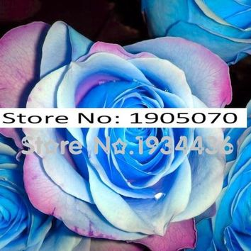 Flower 20+Pcs Blue Stripe Rose Rare Rosas Bush Blue White Dragon Flowers Bonsai Plant for Home Garden Gorgeous Cut Flower