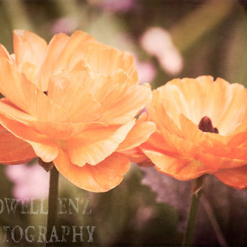 Poppies Pair 5x7 Orange Poppy Fine Art Print Flower Photography Floral Home Decor Wall Art Nature Photography