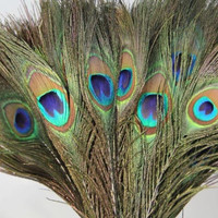 Best Selling Pack of 25pc Natural Peacock Feathers 10-12'' for DIY home holiday decorations wedding party