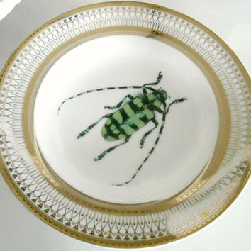 Gold Porcelain Bug Plate(s). Very Steampunk. Discounts for Large Dinnerware Orders, please Contact me!