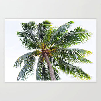 Caribbean Palm - Photograph Print, Beach Coconut Palm Tree Decor, Tropical Green Surf Style Accent Wall Art Hanging. 8x10 11x14 16x20 20x30