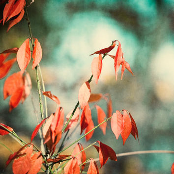 "Teal Photograph, fall red orange dark turquoise rustic print rust leaves brown autumn wall art aqua branch photo botanical, ""November Day"""