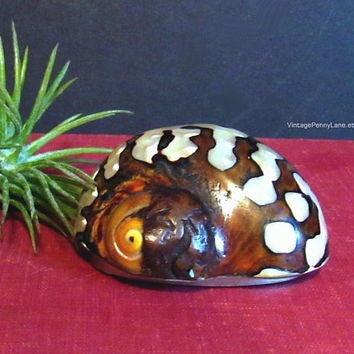 Vintage handmade Seashell Trinket Box, Secret Compartment, Shell Compact, Mother of Pearl