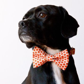 Tangerine Honeycomb Bow Tie Dog Collar by SillyBuddy on Etsy