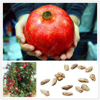 Delicious Non-GMO Turkey Giant Pomegranate seeds ourdoor fruit tree seeds Super sweet fruit seeds for home garden 30 pcs/bag