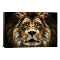 iCanvas 'The Lion from SD' Smart Painting Print on Canvas