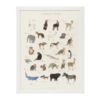 CELEBRATING THE ALPHABET - JACQUELINE SCHMIDT | Framed Animal Art Print | UncommonGoods