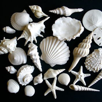 White Chocolate-Filled, White Candy Sea Shells, Candy Sand Dollars, and Candy Starfish Set - 26 piece assortment