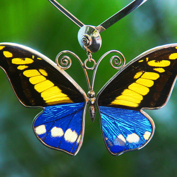 Love Butterfly Blue and Orange. Handmade natural butterfly wings, big pendant.