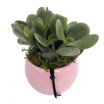 "Magnetized Victoria Planter with Live Plant - Pink - 3 x 2.5 x 5"" - Live Trends"