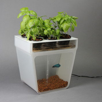 Home aquaponics kit self cleaning fish from kickstarter for Fish tank cleaning kit