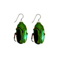 Real Green Beetle Earrings Moonrise Kingdom