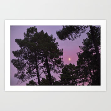 Moon through the trees. Into the woods at sunset by