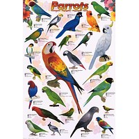 Parrots Psittacines Education Poster 24x36