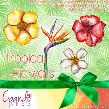 Tropical Flowers 4 clip art (png images transparent background)
