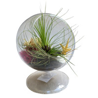 Hairy Circle Airplant Terrarium-Father's Day, Birthday, House Warming