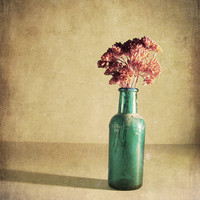 "Flower Photography - Antique Bottle - Nature - Home Decor - ""Red and Blue"" - 8x10 Photograph"