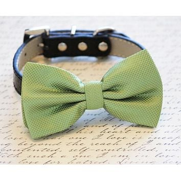 Grass Green Dog Bow tie attached to Leather Collar, Spring wedding