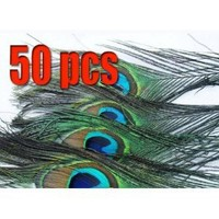 Pack of 50pc High Quality Real Natural Peacock Feathers 10-12'' with Kare & Kind® retail packaging