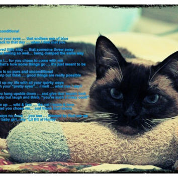 Photography; Photographic Arts; Wall Art; Animal Art; Cat Art; Nature; Wall Decor; Home Decor; Poetry; Poem; Unconditional Love
