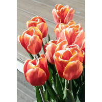 Floral photography, nature decor, spring tulip home decor orange green, flower print, spring decor, 5x7 (13x18) NEW from Amsterdam