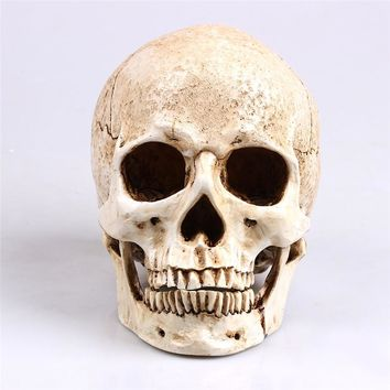 P-Flame White Head Human Skull Model Replica Medical Realistic Lifesize 1:1 Emulate Resin Crafts Skull For Decorative