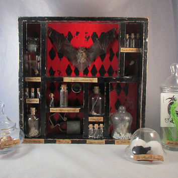 CUSTOM Curiosity Cabinet with specimens, apothecary jars, taxidermy, curiosities and oddities shadow box Victorian