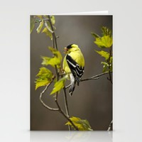 Goldfinch in Song Stationery Cards by Christina Rollo | Society6