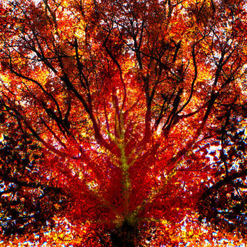 Kaleidoscopic Autumn Winds ~ Abstract Art Made-To-Order Photography, Canvas & Wall Prints Surreal Simultaneity Graphic Design