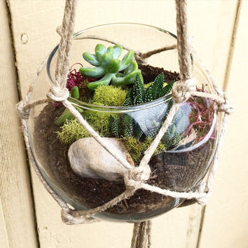 Best Glass Terrarium Kits Products On Wanelo