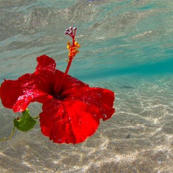 Hawaiian Hibiscus Underwater Photography,Pretty Red Hibiscus Floating,Floral Island Artwork,Hawaiian Lei Photo,Natures Colors Photo,Hibiscus