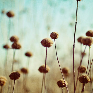 field, flowers, nature, blue, brown, fine art photography