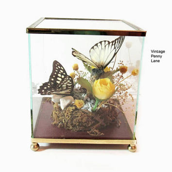Vintage Preserved Butterfly, Glass / Brass Display / Terrarium Case / Box