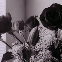 All About Black Roses