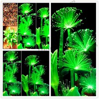100pcs/bag water plants Emerald Fluorescent Flower seeds,aquarium decoration grass seed aquarium plants seeds