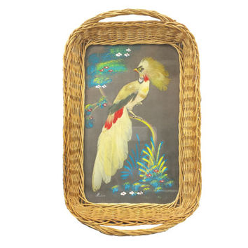 Bird Feather Tray, Real Feather Bird Picture, Mexican Folk Art, Wicker Tray Handles, Vintage Exotic Bird Picture Wall Decor, Feathercraft
