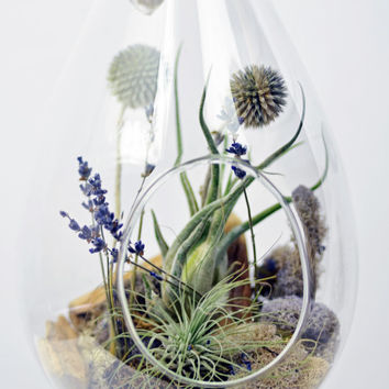 Airplane Terrarium - Hanging glass - Green Gift - Home Decoration - Purple